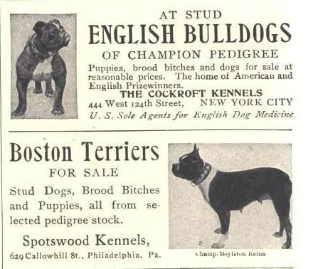 1907 English Bulldog And Boston Terrier Kennel Ads English Dogs