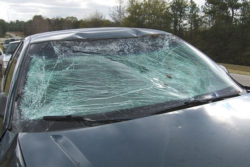 What A Deer Can Do To Your Windshield Car Auto Repair Windshield