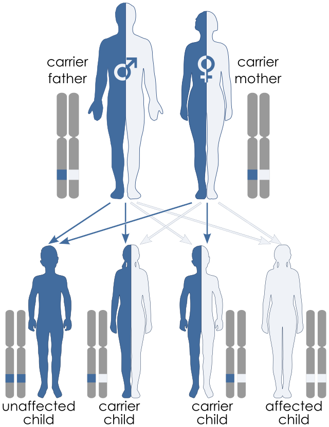 Illustration Of Autosomal Recessive Inheritance Each Parent Has
