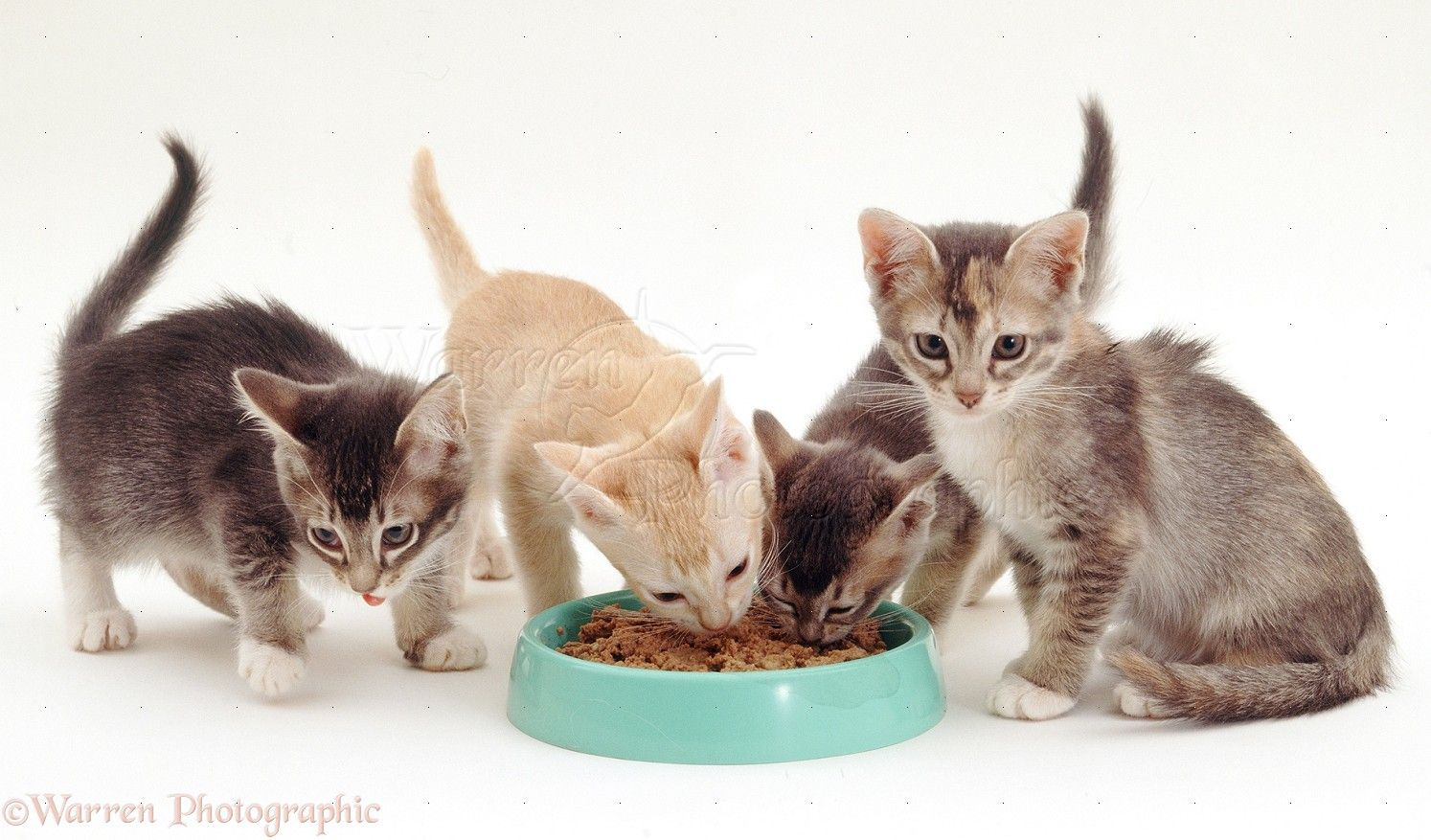 Can Cats Eat Oatmeal And What Are The Benefits For Cats Newborn Kittens Owning A Cat Cute Cats