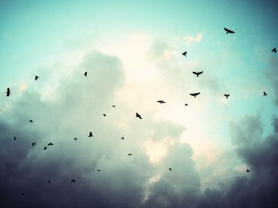 Birds In Sky Birds Flying Bird Photography Birds In Flight