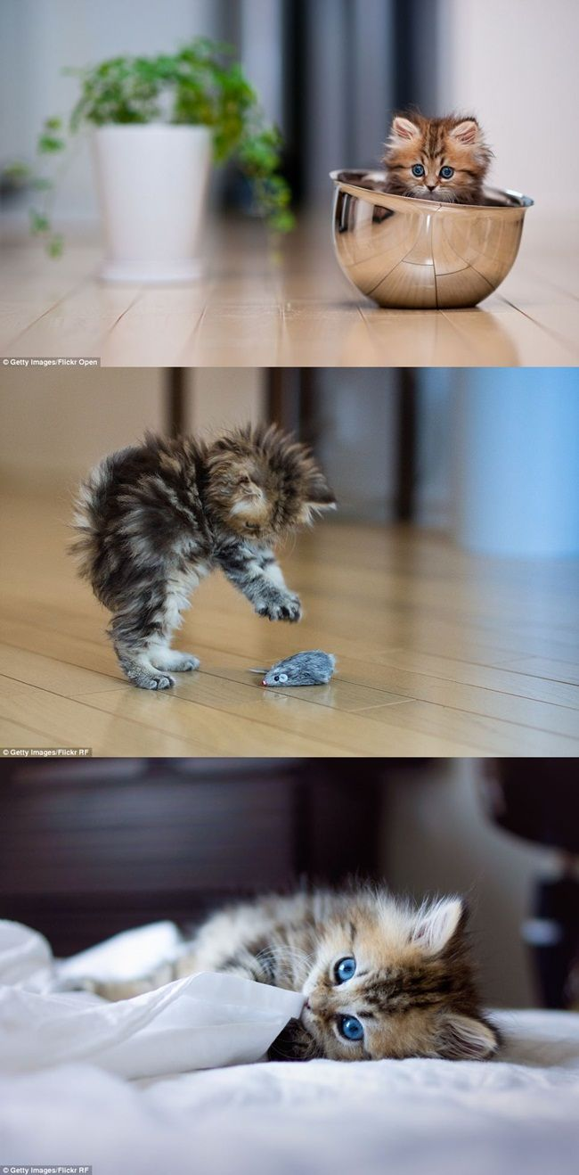 Pin By Kaitlyn Browne On Head Esplodey Cutes Kittens Cutest Crazy Cats Animal Jam