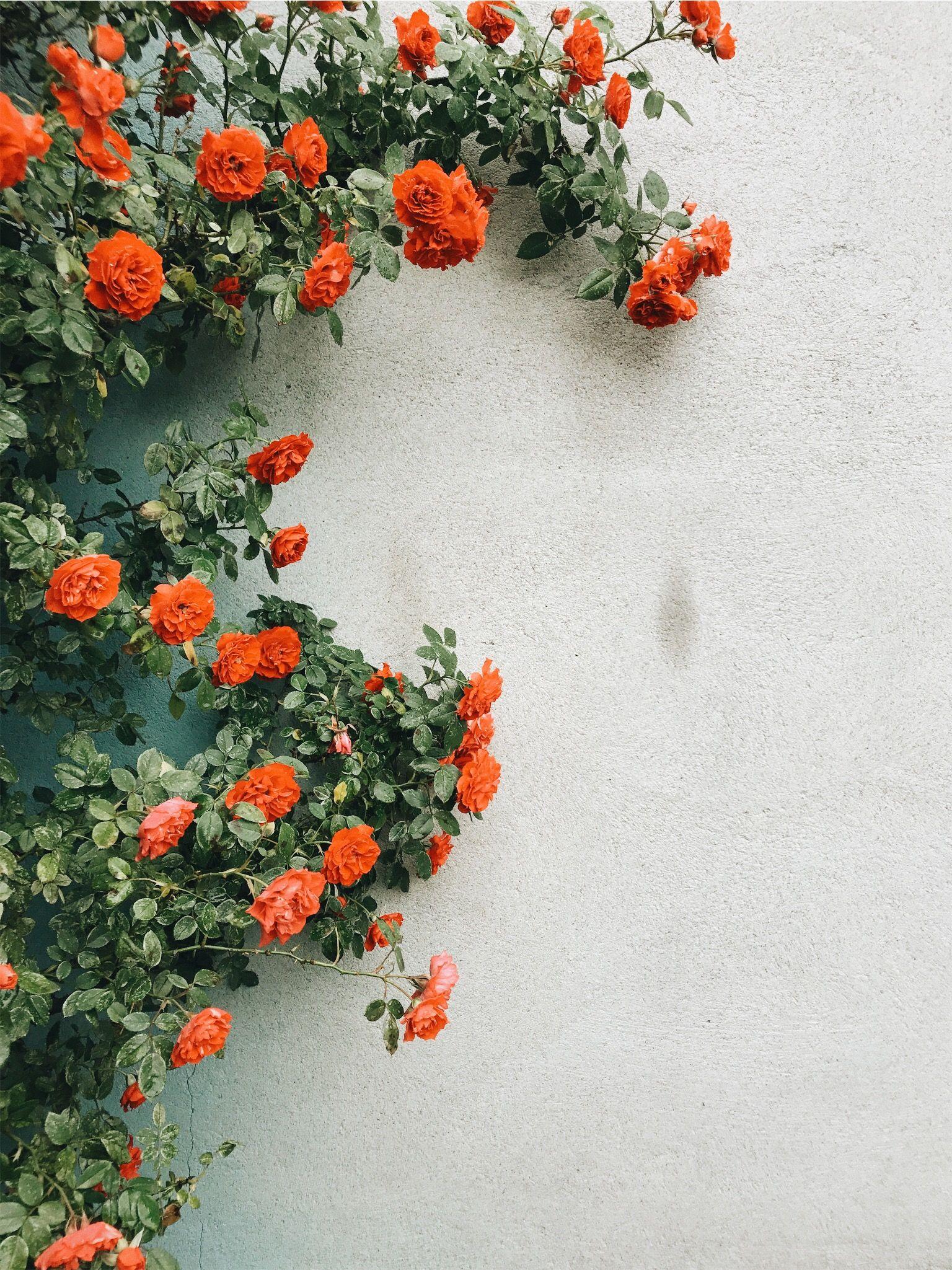 Pinterest Autumnek Fotos Com Flor Papel De Parede Flores