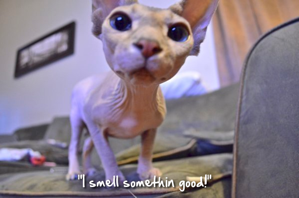 Admin's Soup of the Day! 8.25.15 http://sphynxlair.com/community/threads/admins-soup-of-the-day-8-25-15.32955/ #sphynx #sphynxcat #sphynxlair