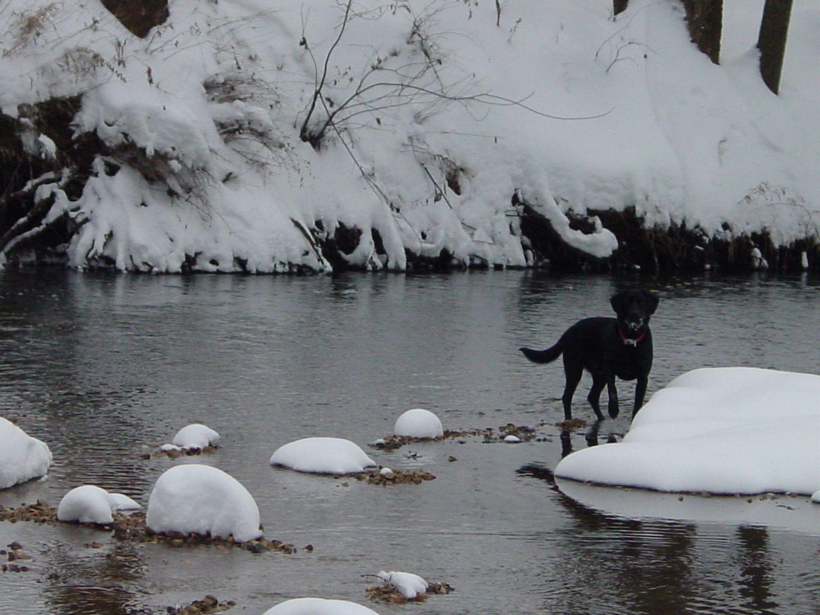 Oscar at the river