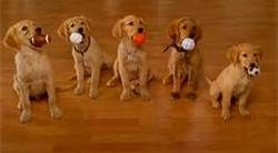 Air Buddies And How To Teach Your Dog To Play Soccer Volleyball