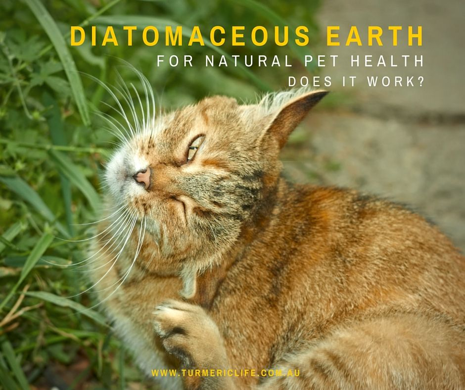 Diatomaceous Earth Fleas, Ticks and other uses