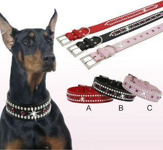 Tipos de collares para perros