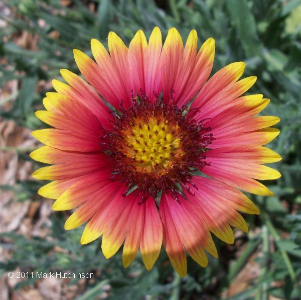 List of Native Florida Plants