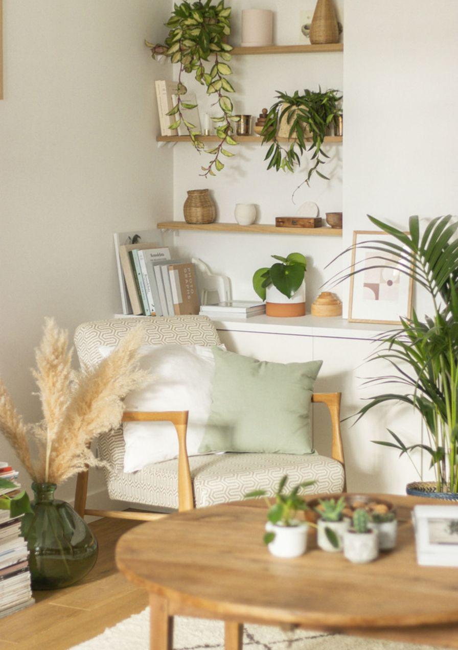 Eine Planzenexpertin verrät Diese Zimmerpflanzen sind gut ...