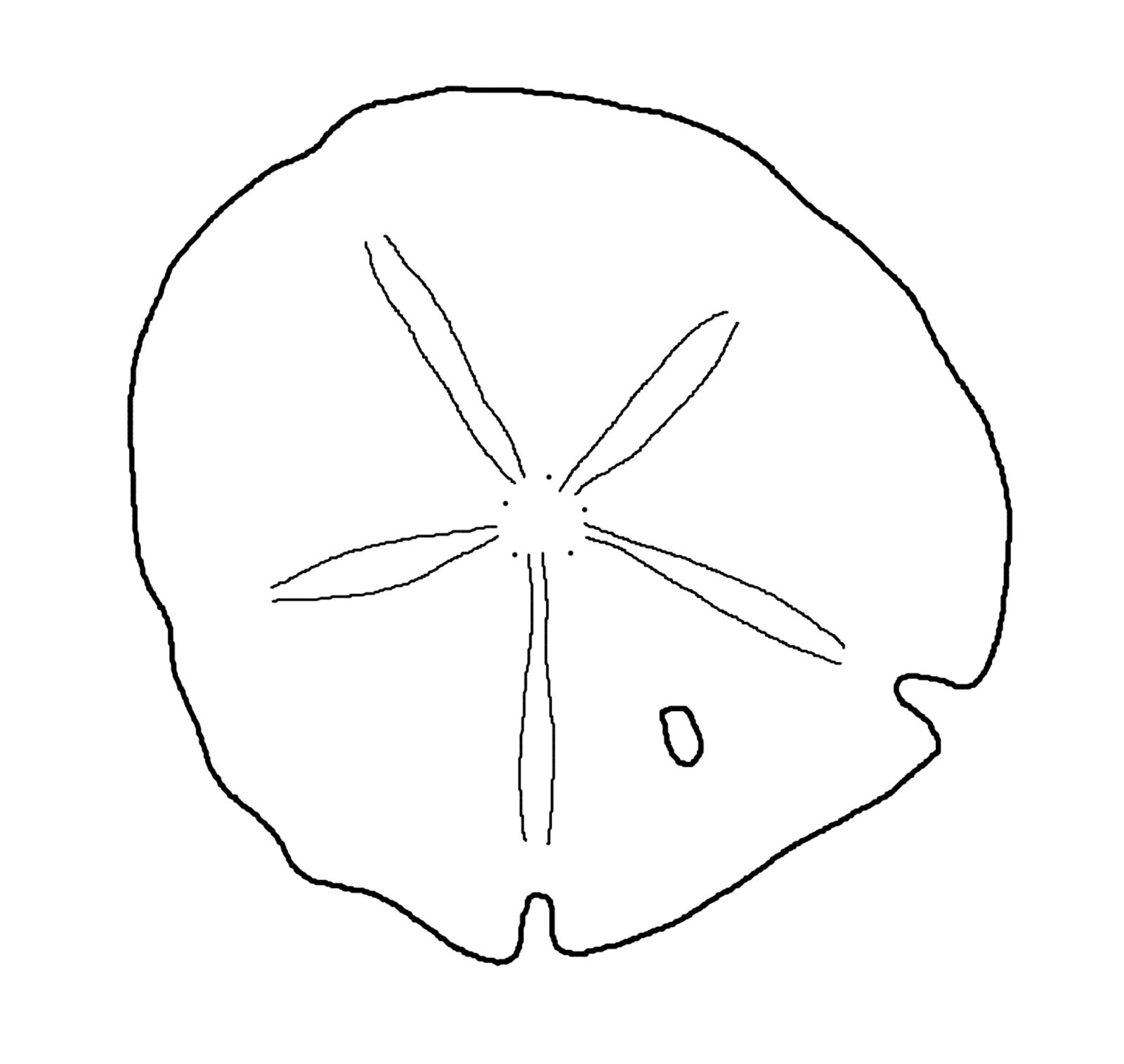 Best Sand Dollar Clip Art 8012 Seashells Template Templates