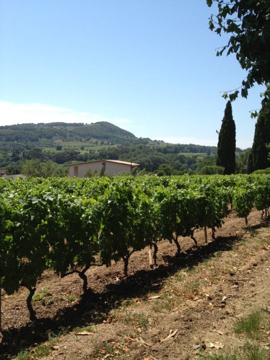Domaine Tempier Vineyard, South of france, Outdoor