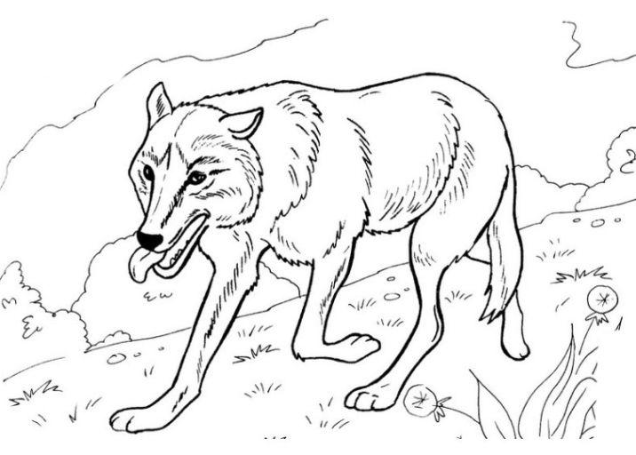 Ausmalbilder Wolf Zum Ausdrucken Ausmalbilder Ausmalen Ausdrucken