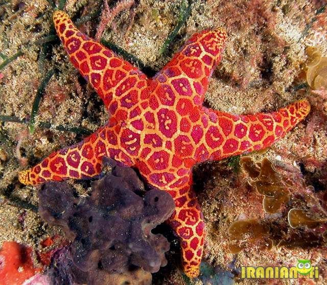 Starfish Anatomy Worksheet | Setare (17).jpg | STARFISH | Pinterest ...