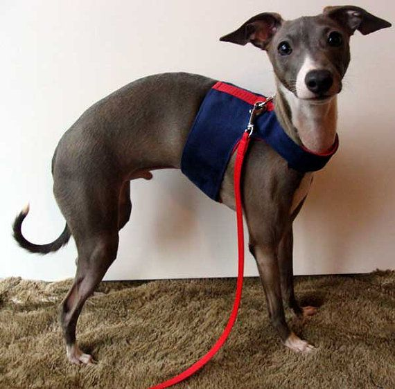 Italian Greyhounds Soft Harness For And Small Breed Dogs In Soft