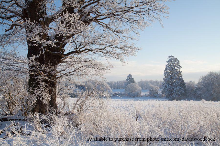 A winter scene at Catton Park in Old Catton, Norwich