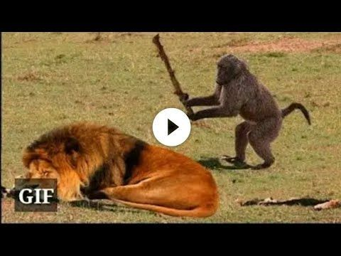Youtube Videos Tiere