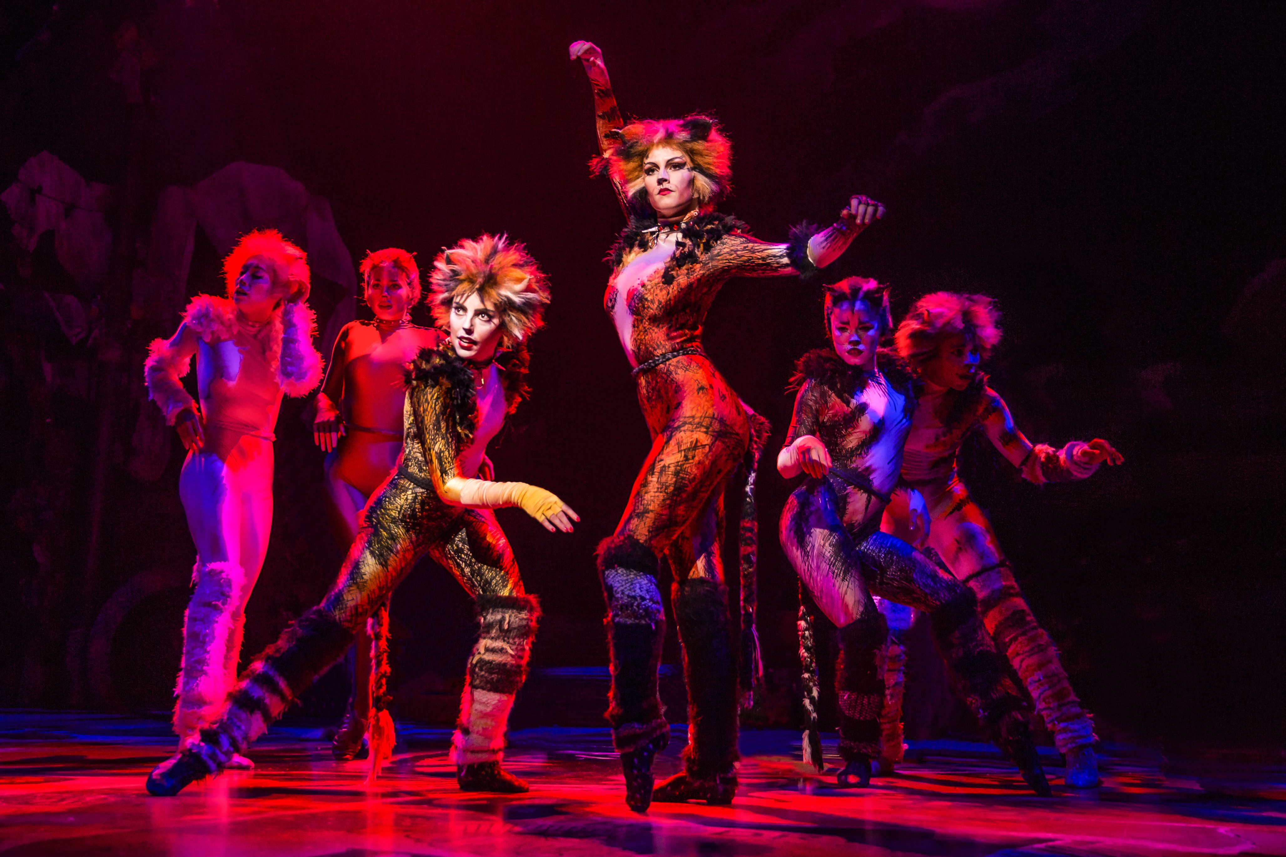 Cats Reliving The Memory Of A Classic Cat Movie Cats The