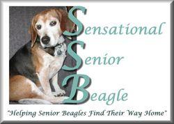 Sensational Senior Beagles Beagle Rescue Dogs New England States