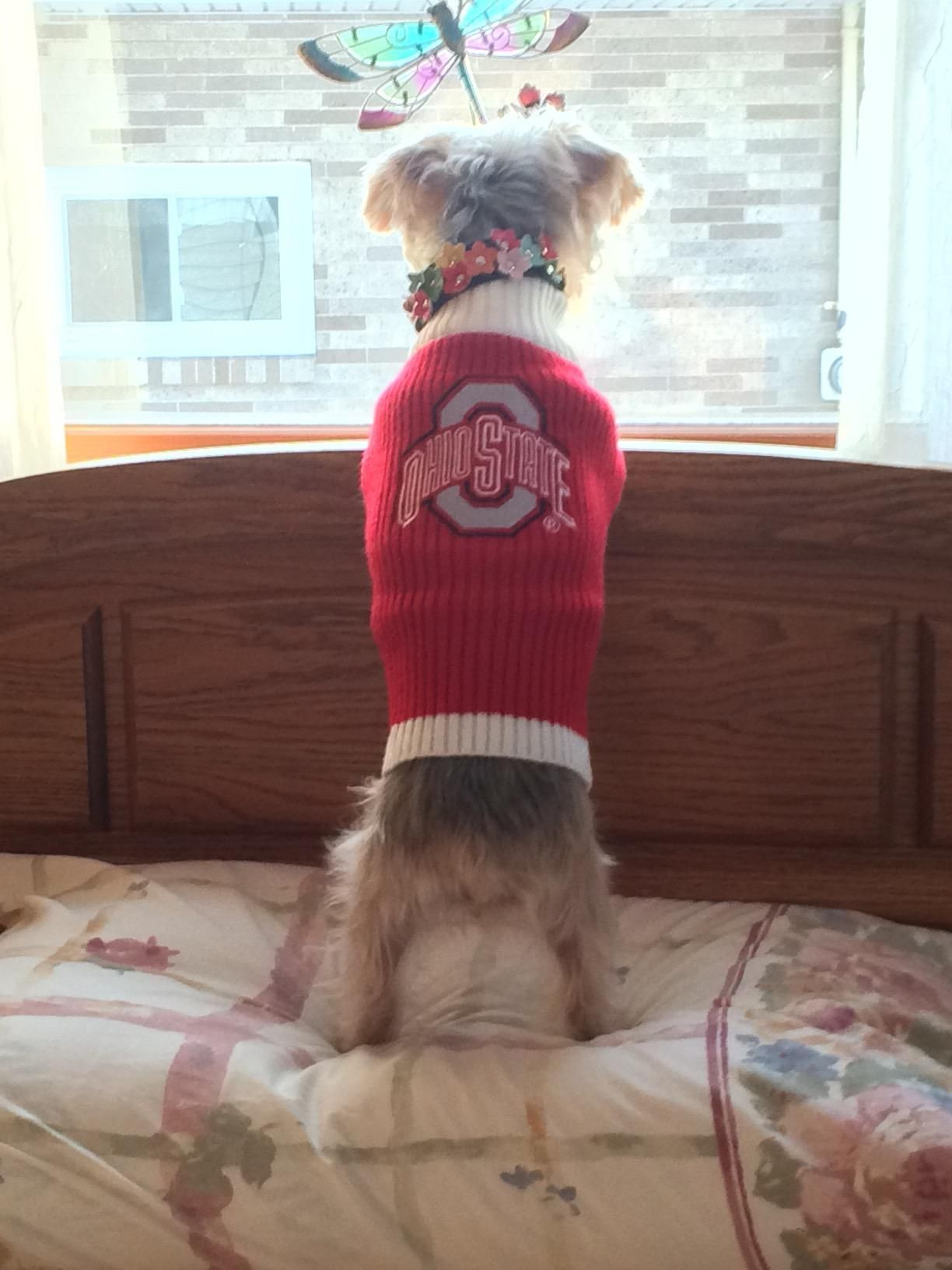 Pets First Ohio State Sweater, Large Pet
