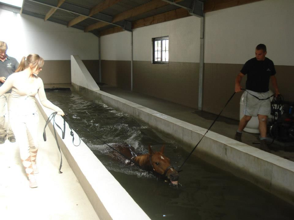 My horse can swim!