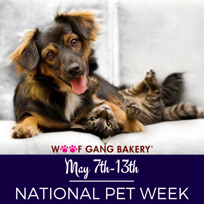 Celebrate Nationalpetmonth With Woof Gang Bakery Deland Health