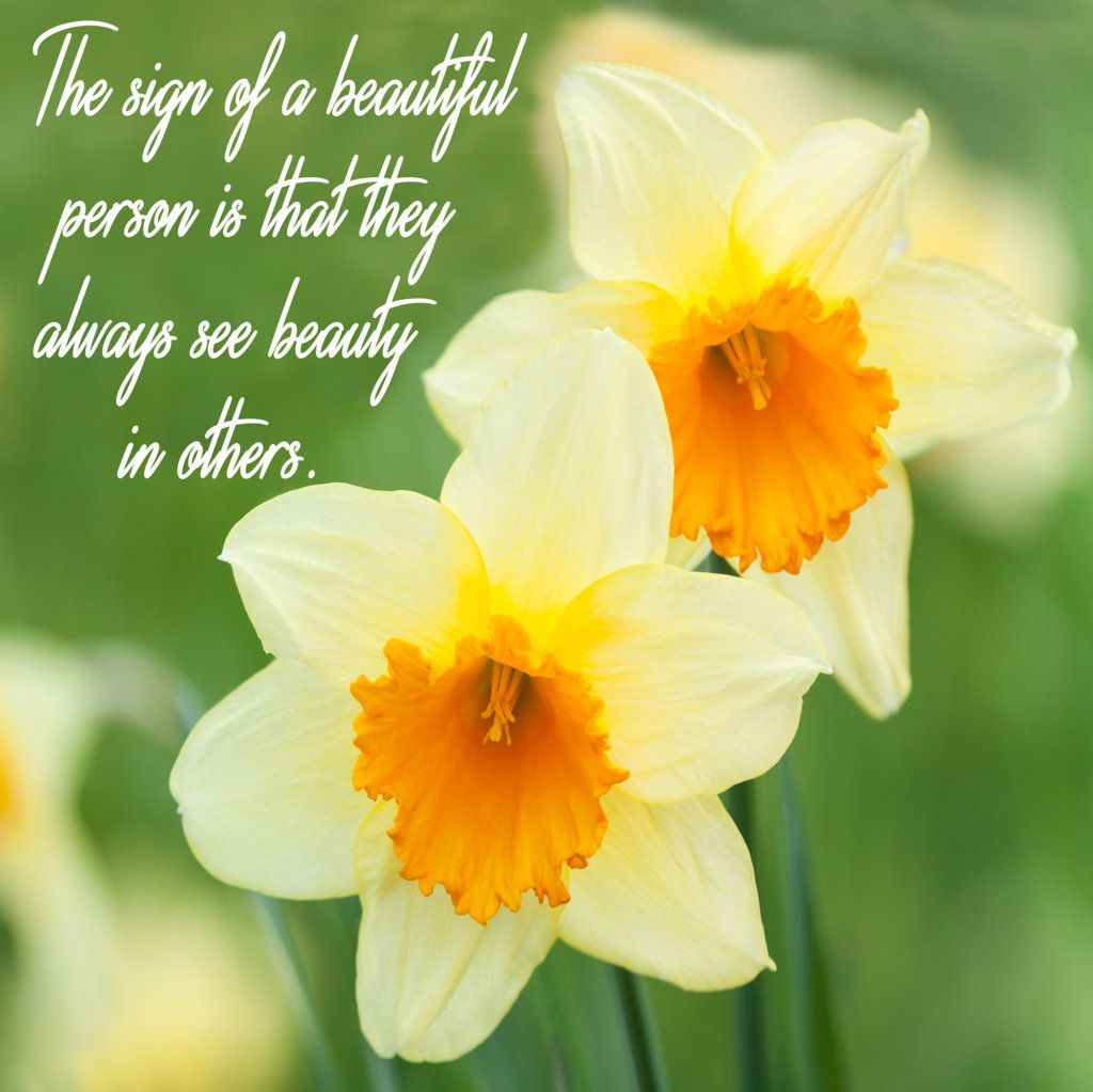 The Sign Of A Beautiful Person Is That They Always See Beauty In Others Narcissus Flower Flower Meanings Daffodil Flower