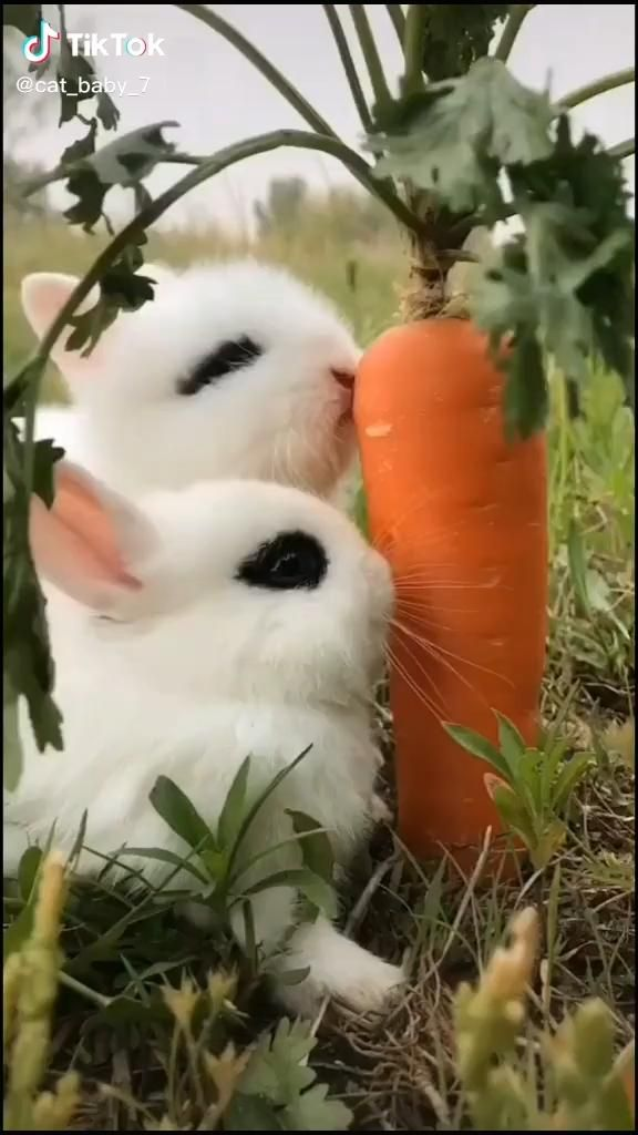 The Cutest Bunnies On This Planet