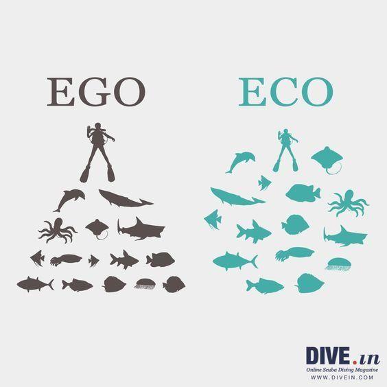 🐟 🐠 🐡 🐙 🐬 rispettiamoci  🐟 🐠 🐡 🐙 🐬  #scubadiving #underwater #sealife #Animalista #eco