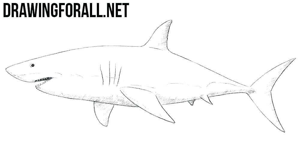 easy sharks to draw