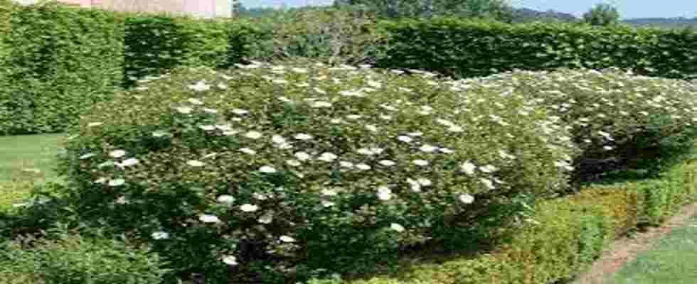 Tipos de arbustos Jardines pequeños Pinterest Arbustos