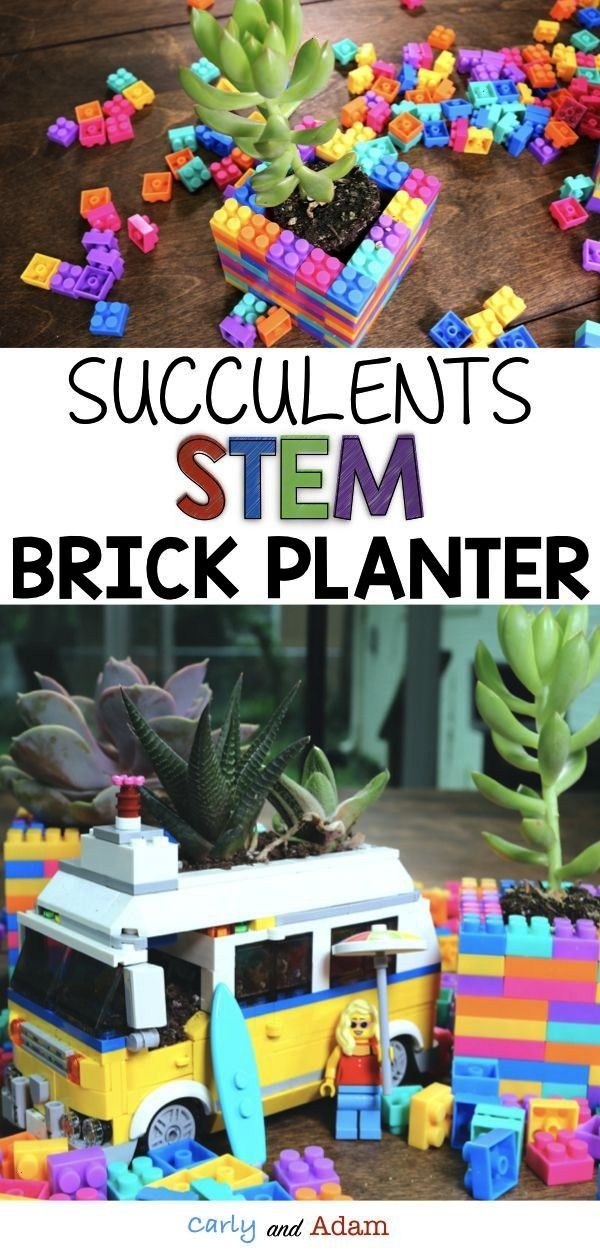 STEM: Succulents are amazing desert plants! Students learn all about succulents and their habitats,