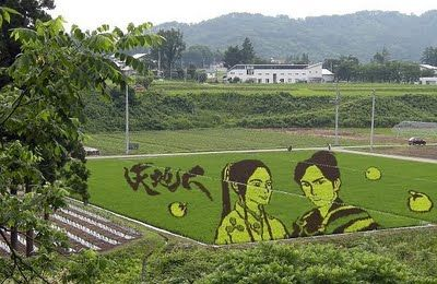 China Rice Field Art | Uday Fun Blog: Rice fields in China