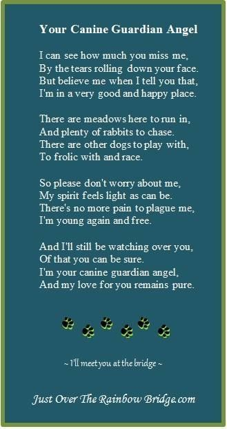 Pin by Terry Stiles-Mckee on Dearly Departed   Dogs, Dog