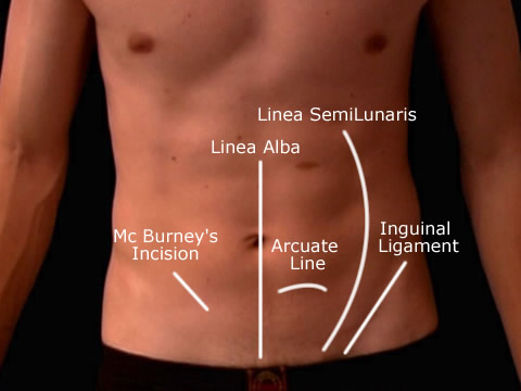 Surface Anatomy Abdomen Wall in 2020 Surgical