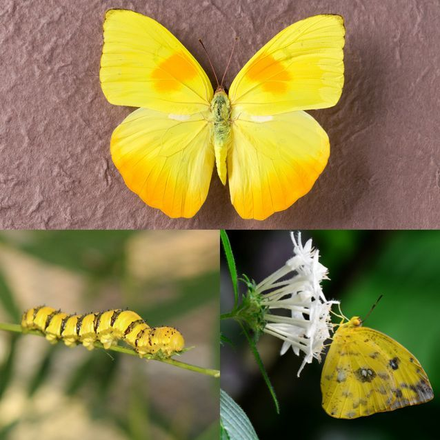 How to identify 11 common butterfly species | Science, Space