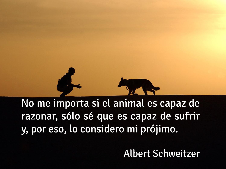 Frase De Amor A Los Animales Nuestro Prójimo Amor