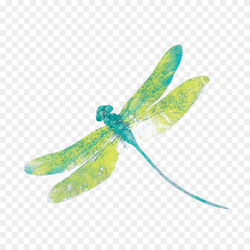 850x850 Dragonfly Png Free Download Dragonfly Png Clipart Free Printables Dragonfly Clipart Free Clip Art
