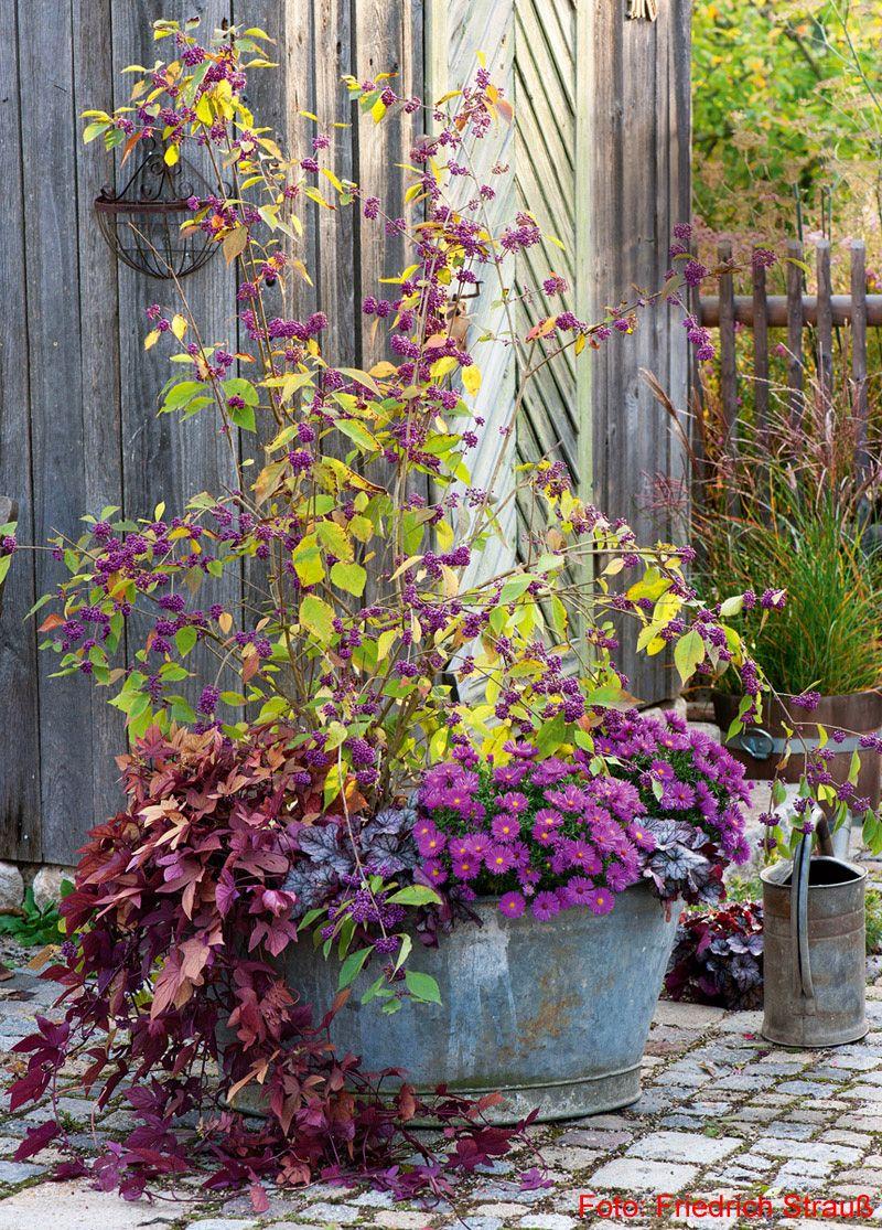 Herbstlich bepflanzte zinkwanne mit liebesperlenstrauch for Herbstschmuck basteln