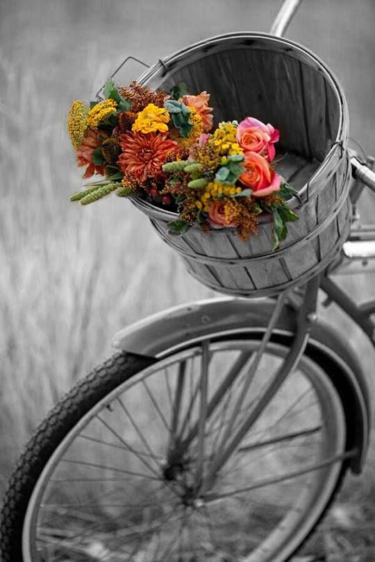 Black and white photo + bicycle + rustic basket + pop of fall flowers + art