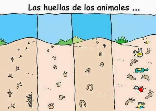 Las huellas de los animales.