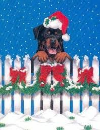 #Rottweiler and #holiday