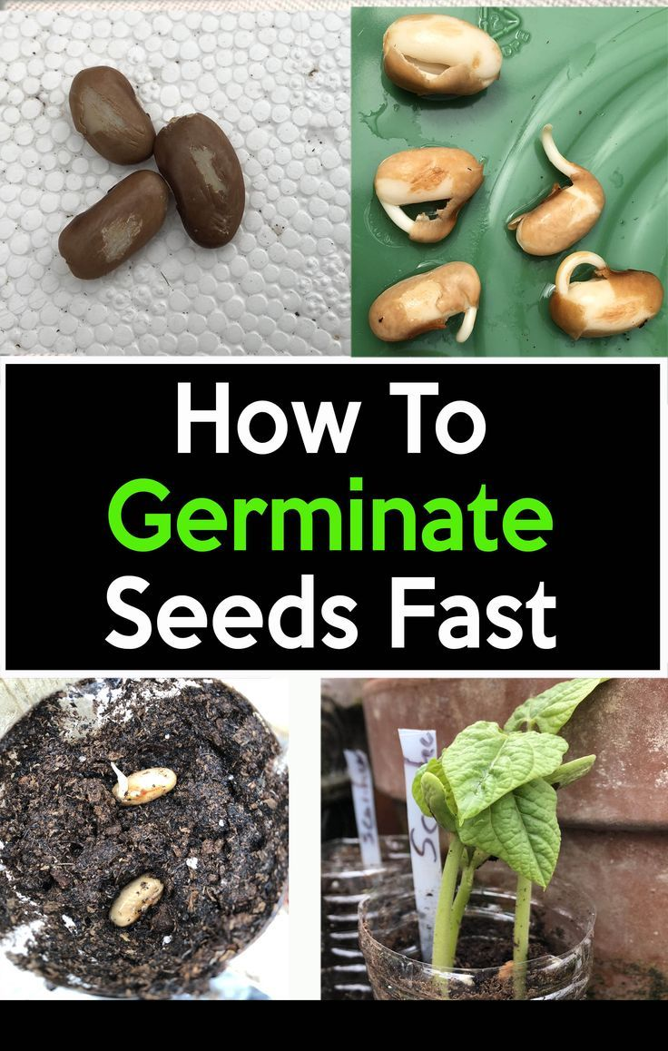 Germinate Seeds Fast Through Scarification Easy Step By Step Instructions Growing Seeds Starting Seeds Indoors Seeds