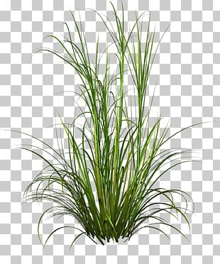 Grasses Grass Green Grass Illustration Png Clipart Free Cliparts Uihere Tropical Illustration Photoshop Illustration Background Images Wallpapers