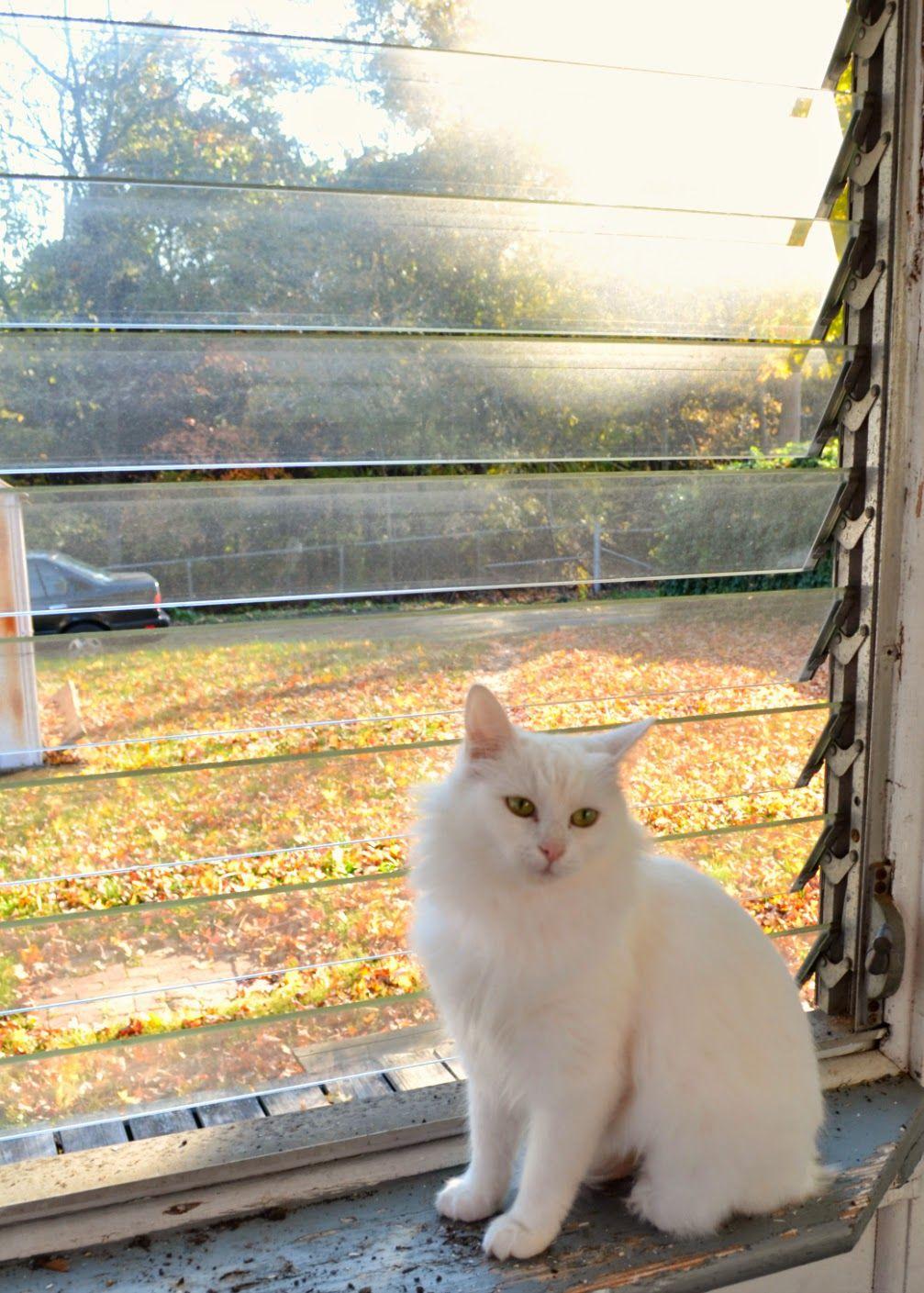 Cat Photos Friday 11 A Nice Autumn Day Teacup cats