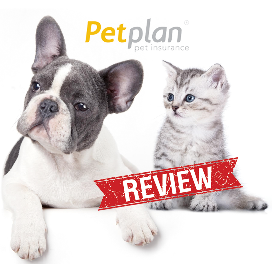5 Steps To Finding The Best Pet Insurance Pet Insurance Dog