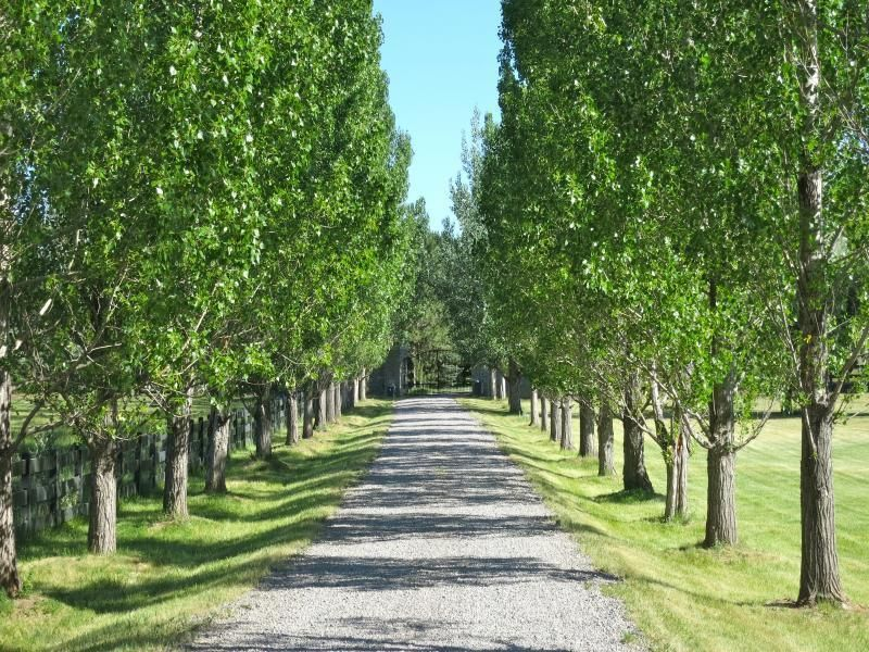 Trees To Line Driveway Pictures Colorado Luxury Homes Fuller Sotheby S International Realty Tree Lined Driveway Landscape Garden Design