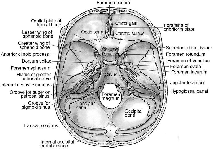 Awesome Anatomy Pinterest Anatomy Sphenoid Bone And Bones