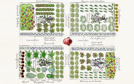 Vegetable Garden Plan The Gardening