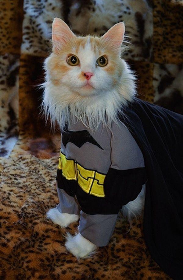 ... Best Animal Costumes Of All Time. Pet batman http   www.bossnotin.com  Pets-Supplies  1349086293ce